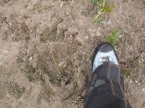 Footprints in the mud....