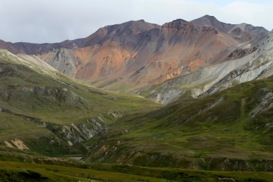 Views of Denali National Park