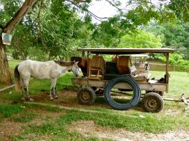Mennonite horse and wagon