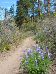 Hermosa Creek Trail