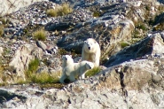 Our wonderful polar bears