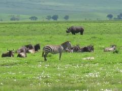 Animals of the Ngorongoro Crater