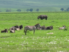 Animals of the Ngorongoro Crater