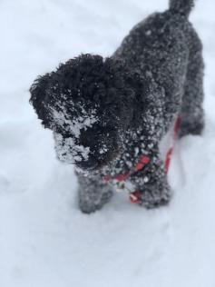 Yogi_snow.jpg