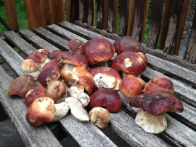 Our porcini crop
