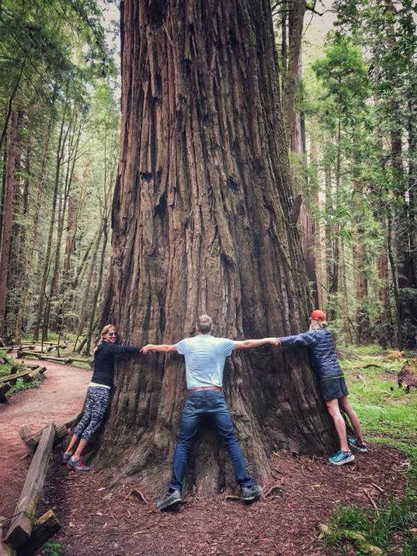 treee hugger